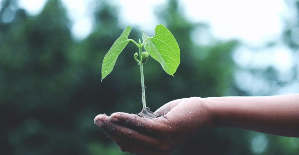 8 tips om je te ontwikkelen en jouw onderneming te laten groeien